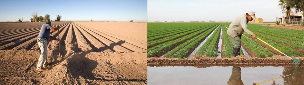 KL-dubbelpano-farmers